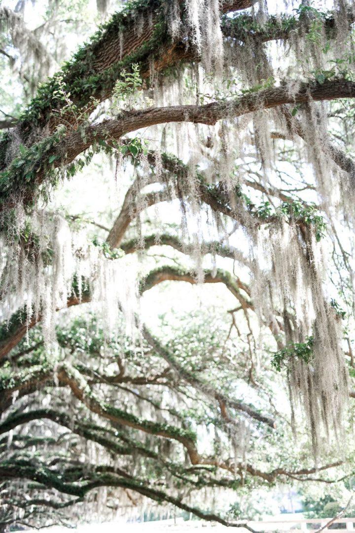 Majestic Oaks at Belfair Plantation- Bluffton, SC -Spring & Summer Wedding